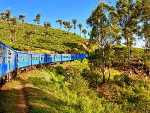 Der Zug schlängelt sich vorbei an Teefeldern