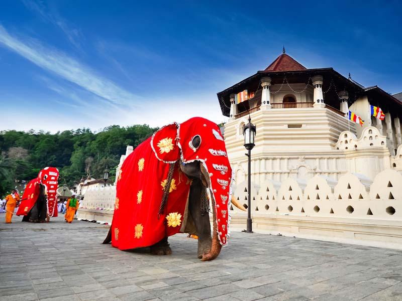 Ein traditionell geschmückter Elefant vor dem Zahntempel in Kandy