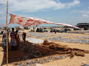 Fischmarkt am Meer in Negombo auf Sri Lanka