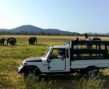 Auf Safari im Yala Nationalpark