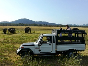 Jeep-Safari durch einen Nationalpark in Sri Lanka