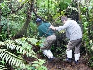 Reisender bei der Dschungelwanderung