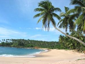 Die palmengesäumte Bucht von Tangalle