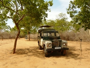Rundreise Sri Lanka: Mit dem Jeep durch den Nationalpark