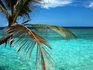 Eine Palme vor kristallklarem Wasser auf den Malediven