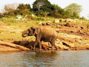 Elefanten im Gal Oya Nationalpark