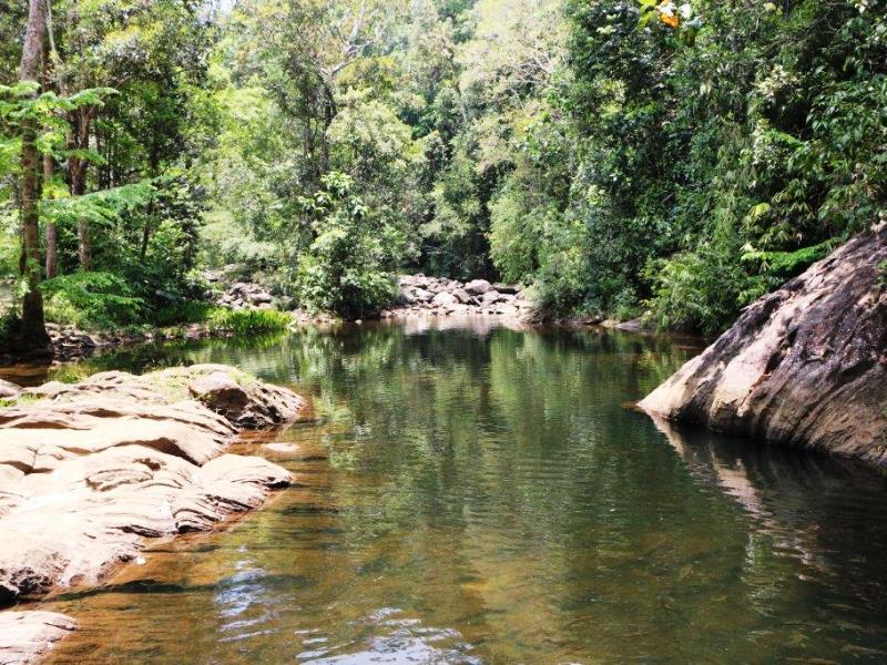 Der Dschungel vom Sinharaja Regenwald