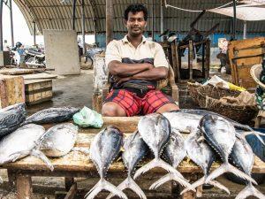 Der Fischmarkt in Negombo - 1 Woche Sri Lanka