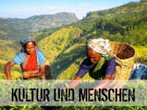 Frauen beim Teepflücken