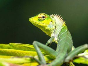 Tierbeobachtung im Sinharaja Regenwald