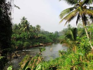 Üppige Dschungellandschaft im Sinharaja Regenwald
