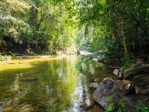 Ein Fluss im Sinharaja Regenwald