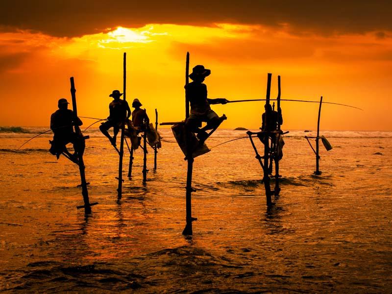 Die berühmten Stelzenfischer in Sri Lanka