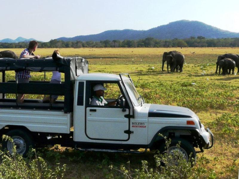 Mit dem Jeep auf Safari im Yala Nationalpark