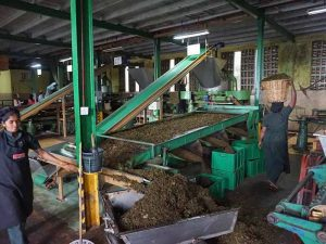 Teefabrik in Ella
