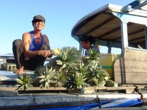 Ananasverkäufer im Mekong Delta