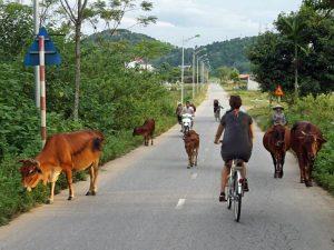 Homestay Vietnam: Mit dem Rad durch verschiedene Dörfer bei Ky Son