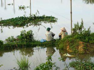 Homestay Vietnam: Blick über die Reisfelder