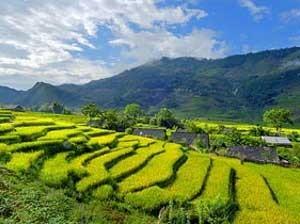 Wanderung durch Reisterrassen von Sapa