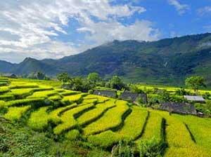 Leuchtend grüne Reisterrassen bei Sapa