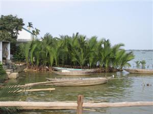 Landschaft Mekong Delta