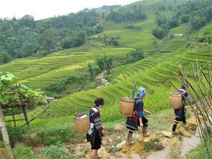 Hmong vor Reisterrassen
