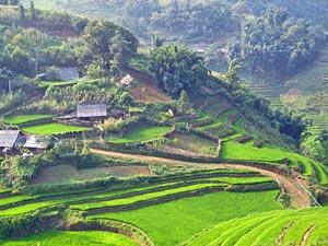 Wandern durch die Reisterassen von Sapa