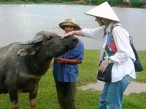 Landarbeit mit Wasserbüffeln bei Ky Son