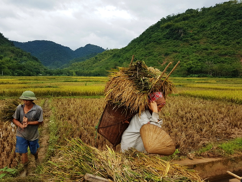 Vietnam Urlaub Farmarbeit Mai Hich