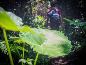 Dschungel Vietnam Trekking