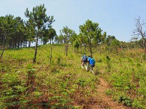 Grüne Umgebung von Dalat Vietnam