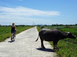 2 Wochen Vietnam: Fahrradtour um Hanoi