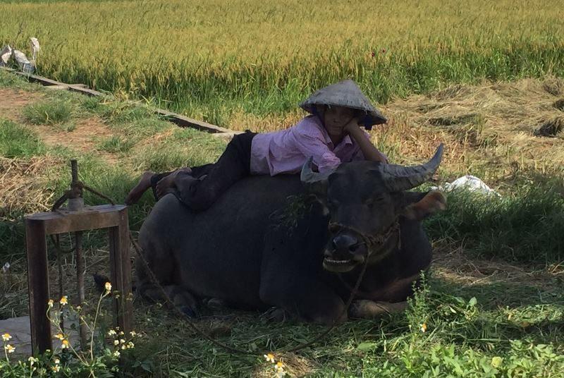 Landleben rund um Hoi An