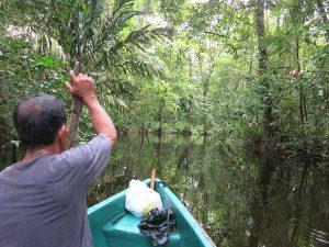 Kanufahrt durch die Kanäle Tortugueros