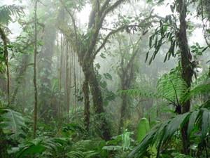 Nebelwald in Monteverde