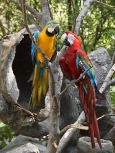 papageien-nationalpark-costa-rica