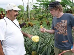 Ananas Tour frisches Obst probieren