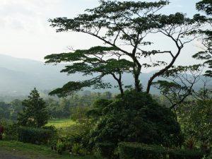 Bijuagua am Rio Celeste