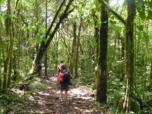üppige Natur im Corcovado