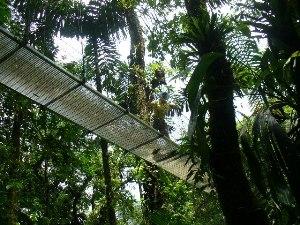 von den Hängebrücken die vielseitige Natur beobachten