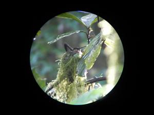 Ein Fernglas ist ein Muss in den Nebelwäldern von Monteverde