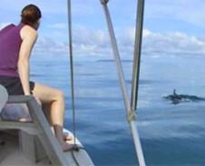 Delfine & Buchten im pazifischen Süden