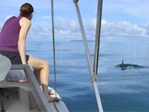 Delfine als tierischer Begleitschutz während einer Bootstour im Genießen Sie die schöne Aussicht vom Boot und entdecken Sie Delphine