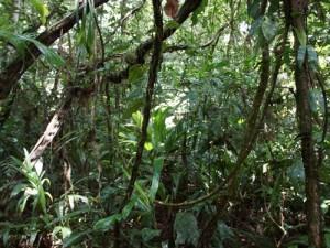 Dichter Dschungel erwartet Sie im Biosphärenreservat Indio Maiz