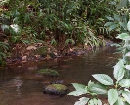 Ein kleiner Fluss schlängelt sich durch die Landschaft