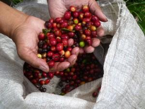 Kaffeetour Costa Rica Panama Rundreise
