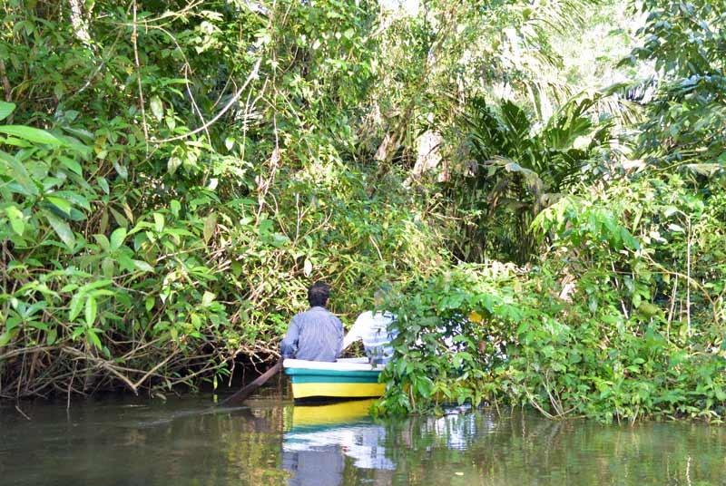 Mit dem Kanu durch den Tortuguero Nationalpark