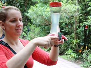 Kolibris in Monteverde