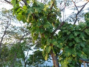Grüne Blätter umranken einen Baum