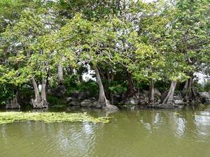 Blick auf die Bäume auf den Isletas